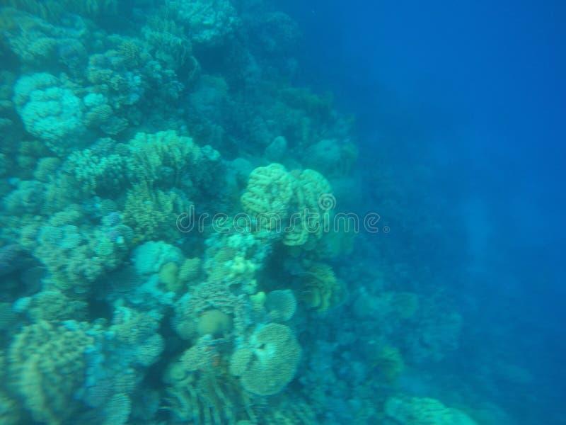 Récifs coraliens photo libre de droits