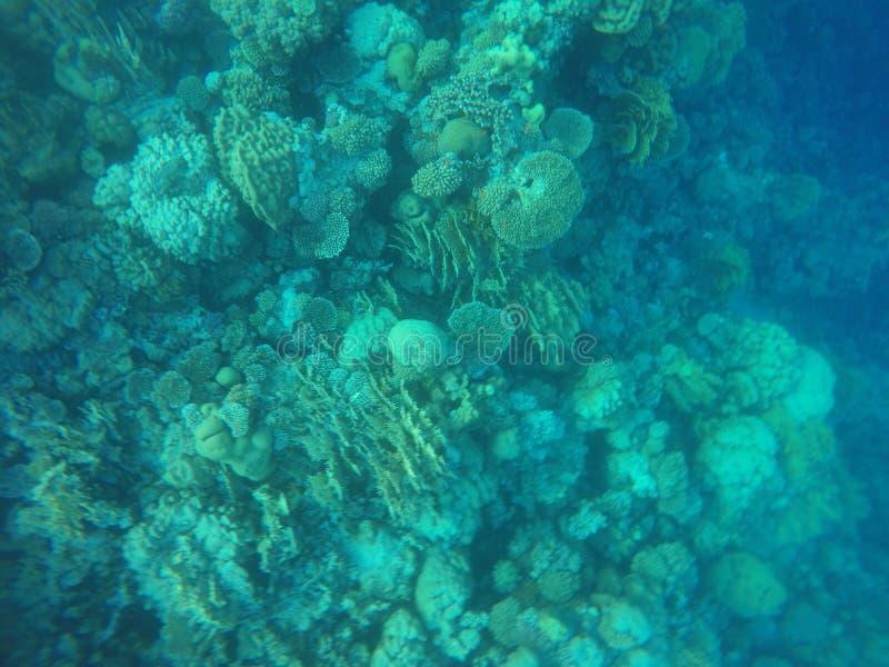 Récifs coraliens photos libres de droits