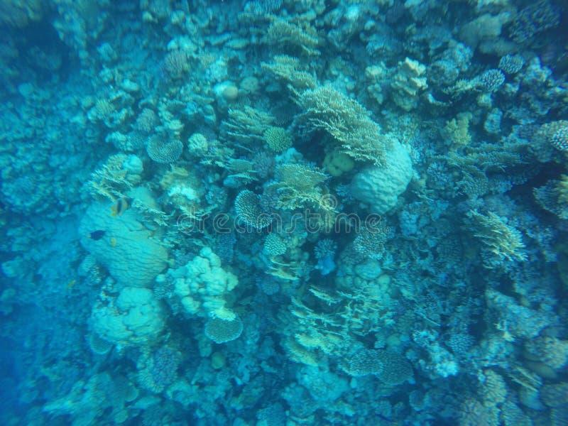 Récifs coraliens images libres de droits