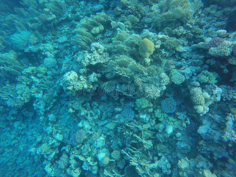 Récifs coraliens photos stock