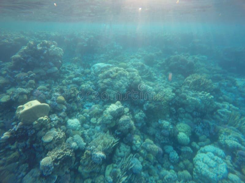 Récifs coraliens image stock