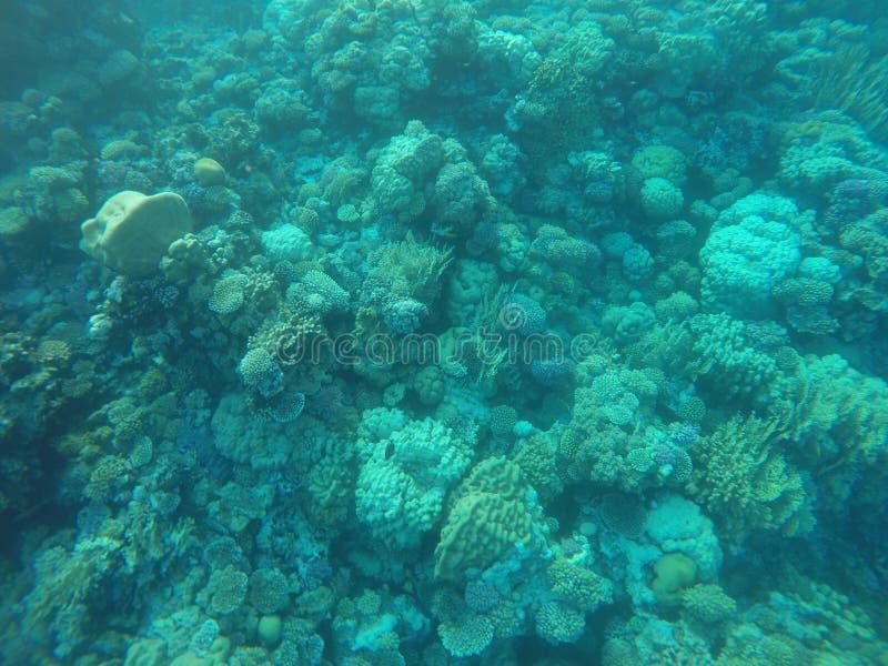 Récifs coraliens photographie stock