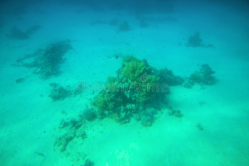 Récifs coraliens et poissons en Mer Rouge image stock