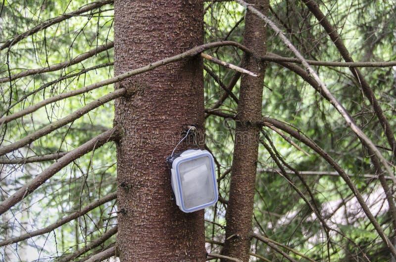 Récipient de Geocache accrochant sur l'arbre impeccable image libre de droits
