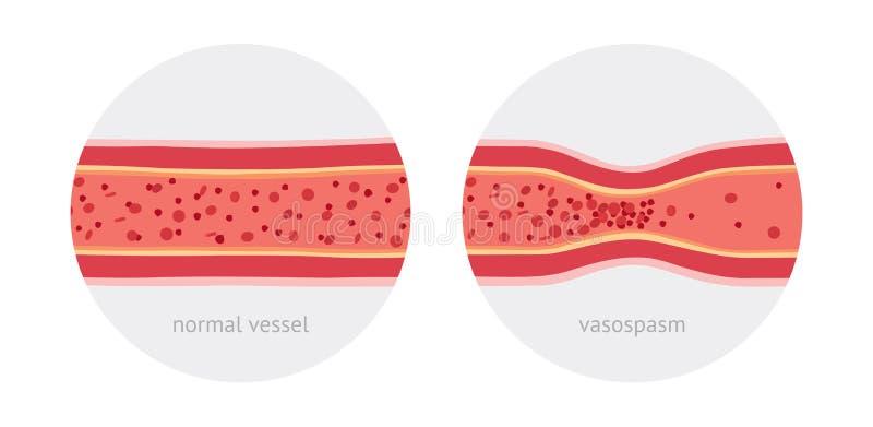 Récipients anatomiques illustration libre de droits
