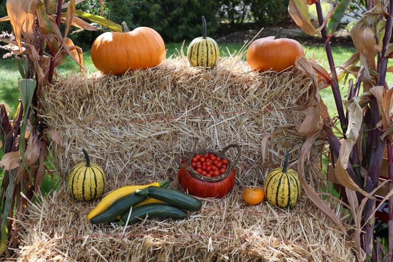 Récolte étagée d'automne sur des balles de foin image libre de droits
