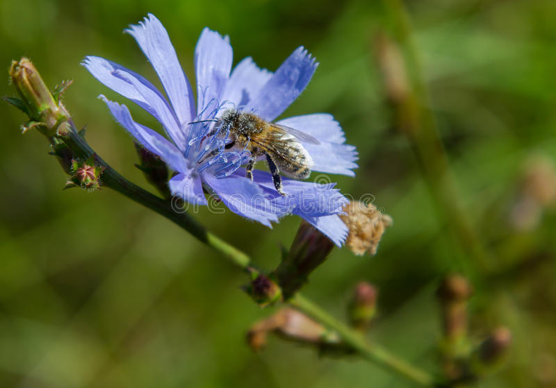 Download Récolte d'abeille photo stock. Image du winged, centrale - 45366456