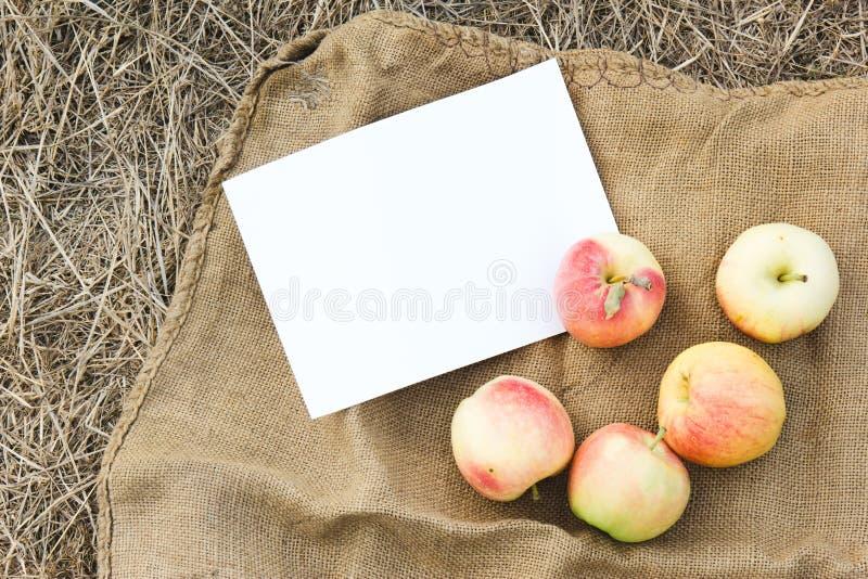 Récolte d'automne des pommes Jour d'action de grâces photographie stock libre de droits