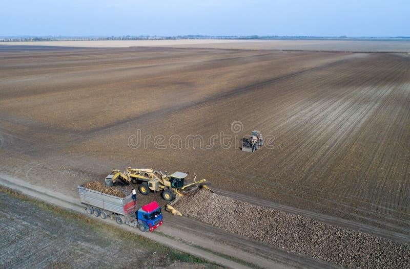 Récolte de betterave à sucre photos libres de droits