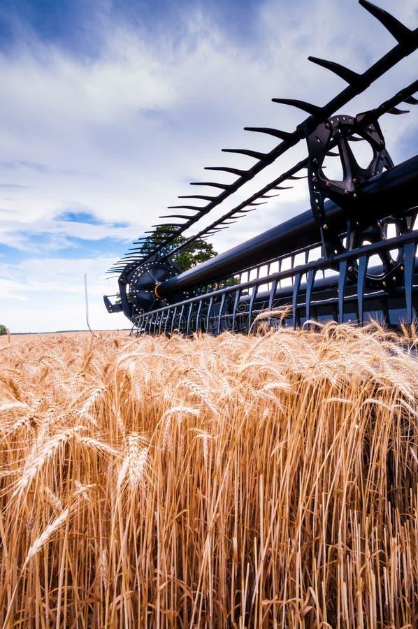 Récolte de blé photo stock