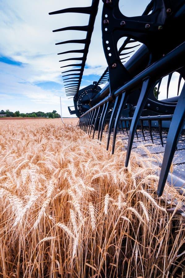 Récolte de blé photo libre de droits