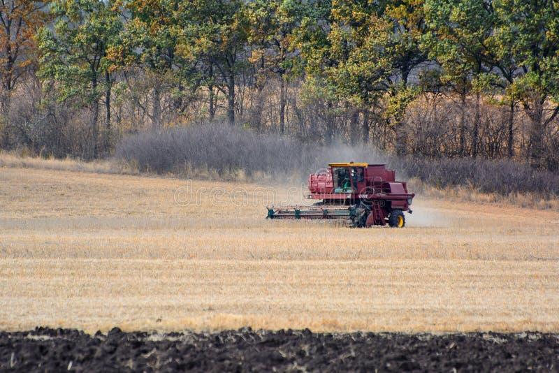 Récolte de cartel sur le champ Grain moissonnant le cartel image libre de droits