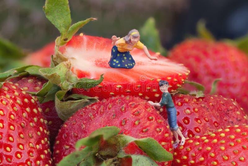Récolte de fraise photo stock