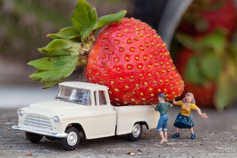 Récolte de fraise photographie stock