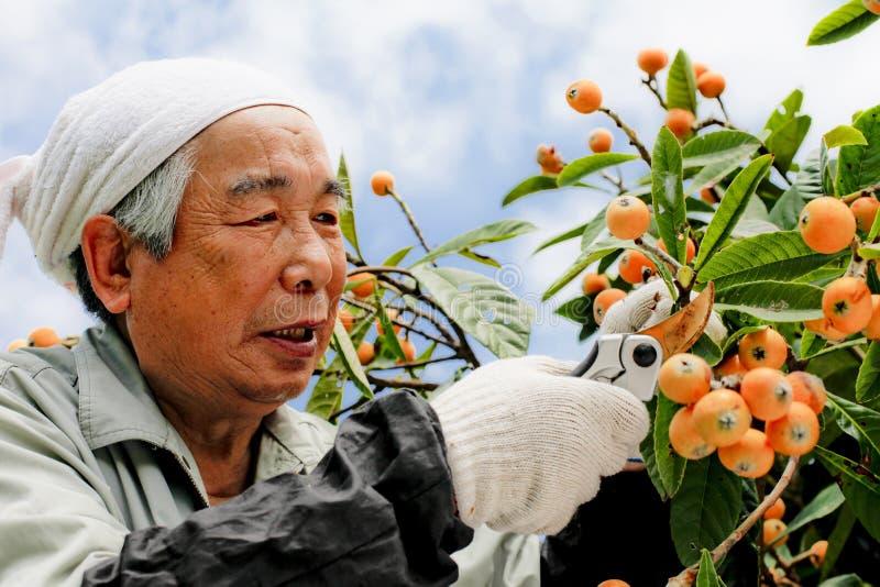 Récolte de fruit image stock