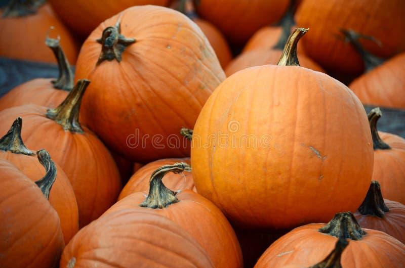 Récolte de grands potirons oranges, courges et sirops photos stock