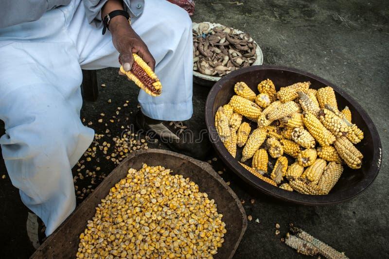 Récolte de maïs dans les Andes photos stock