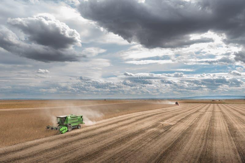 Récolte de soja photos libres de droits
