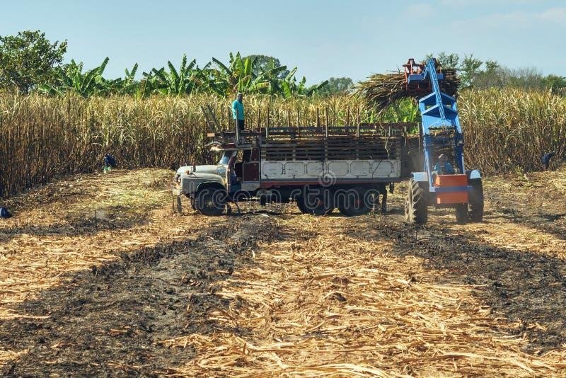 récolte de transport de camion de canne à sucre images stock