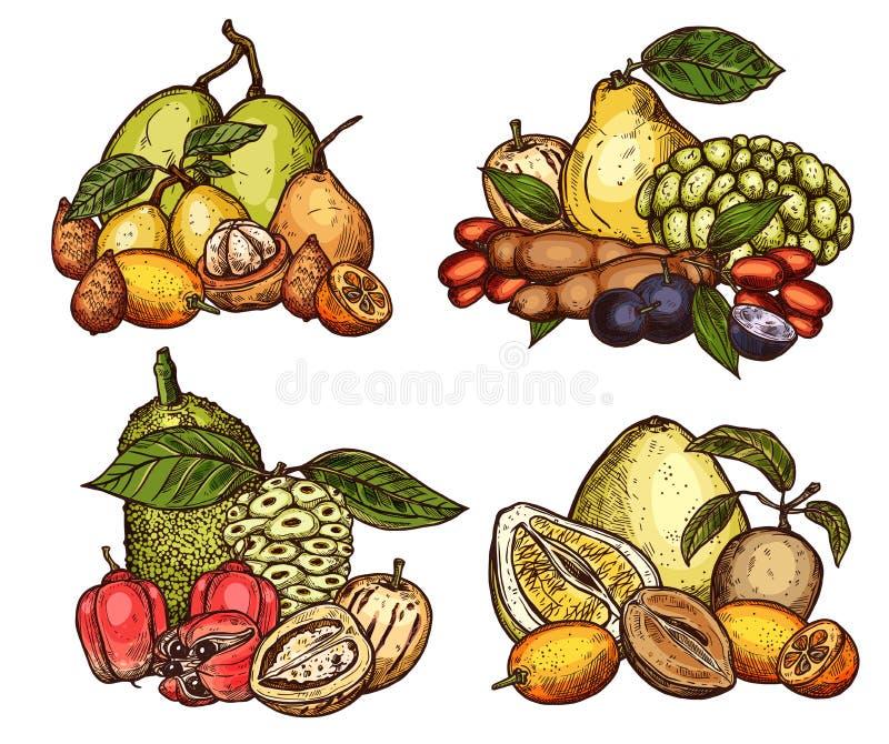 Récolte exotique de fruits tropicaux de vecteur illustration de vecteur