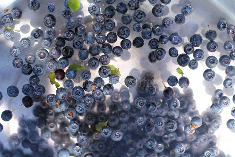 Récolte fraîche de lavage photographie stock