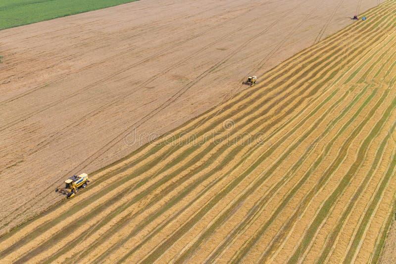 Récolte mécanisée un champ de maïs d'automne image stock