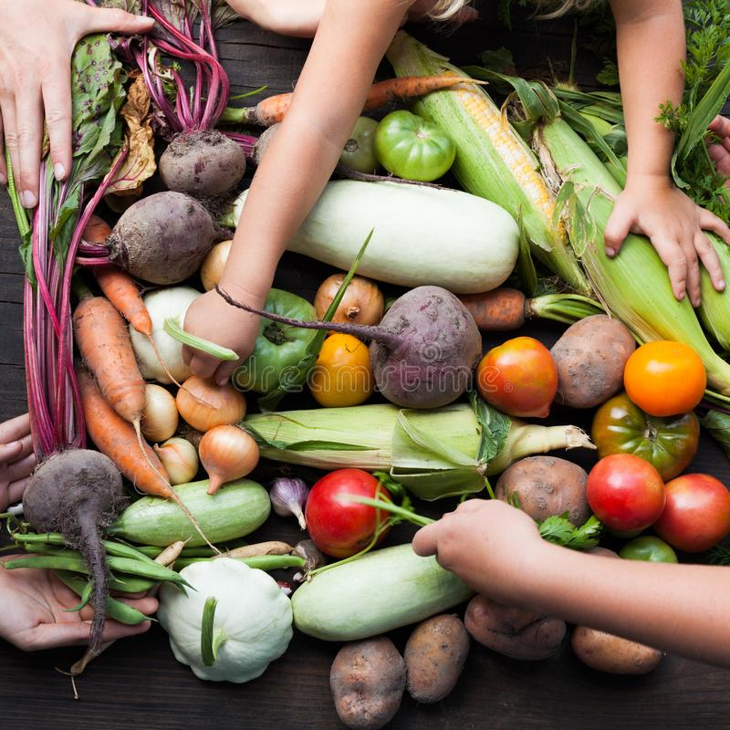 Récolte végétale organique, nourriture d'agriculture d'automne photo stock