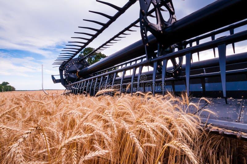 Récolte VII de blé images libres de droits