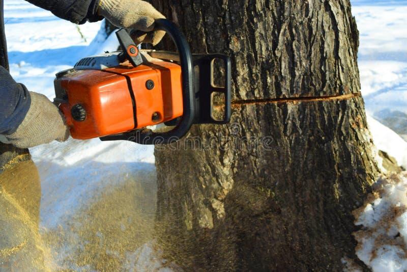 Réduisez l'arbre avec une tronçonneuse images libres de droits