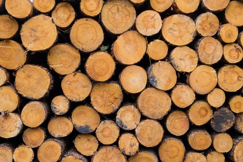 Réduisez les troncs en bois empilés sur l'un l'autre dans la forêt image libre de droits