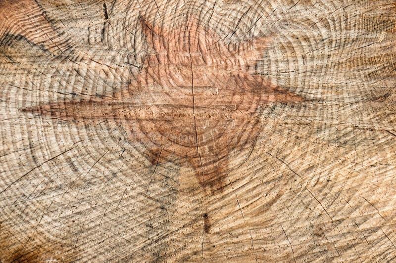 Réduisez un arbre avec un noyau sous forme d'étoile de David Fond en bois images stock