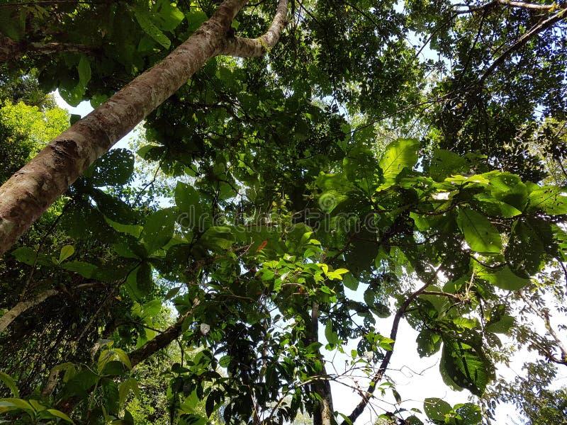Réfléchir léger sur des feuilles photo libre de droits