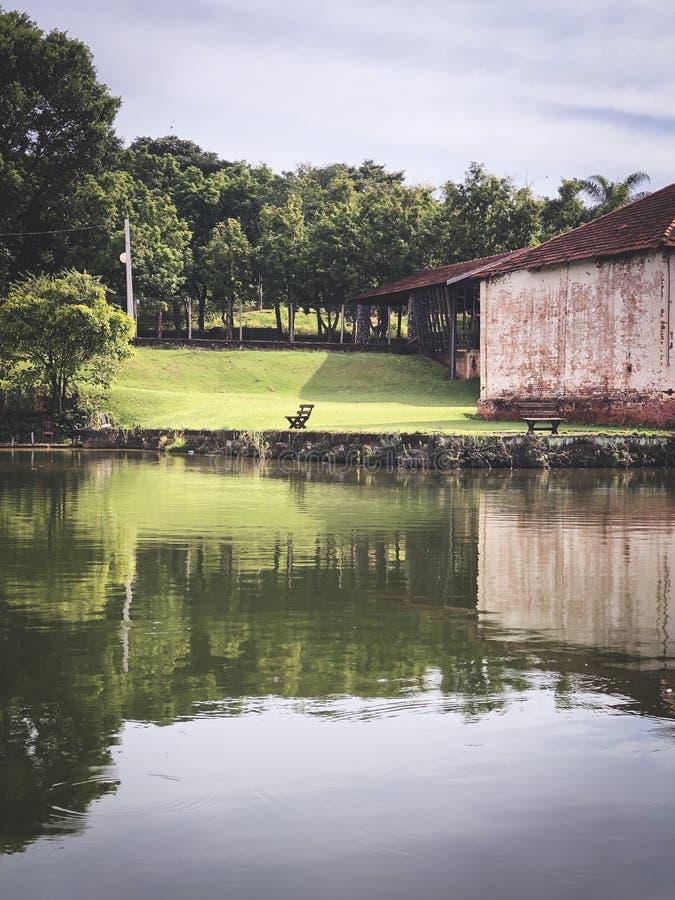 Réflexe d'herbe dans un lac photo stock