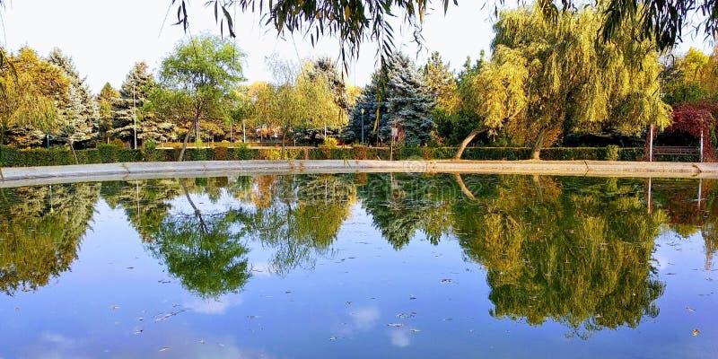 Réflexion d'arbre dans un lac images libres de droits