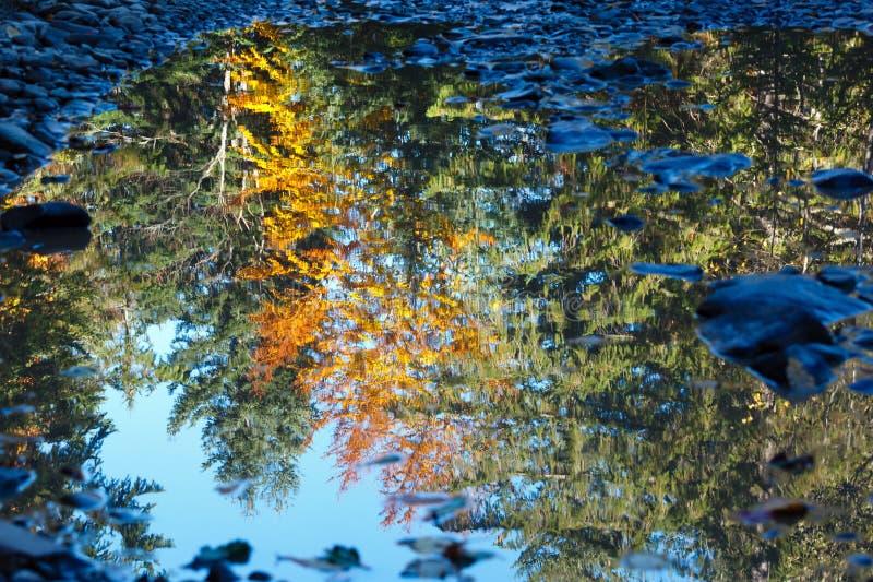 Réflexion d'arbres d'automne dans le magma photographie stock libre de droits