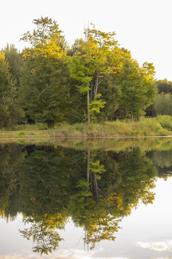 Réflexion d'arbres dans l'étang photos stock