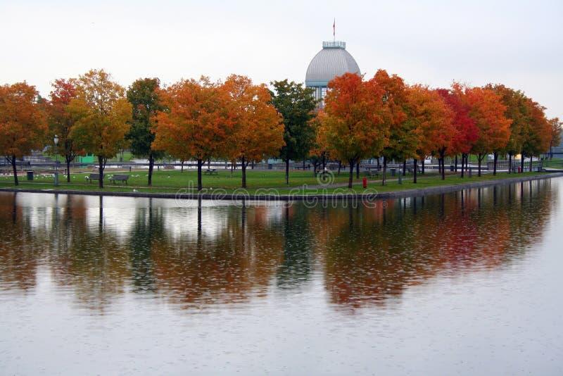 réflexion d'automne images stock