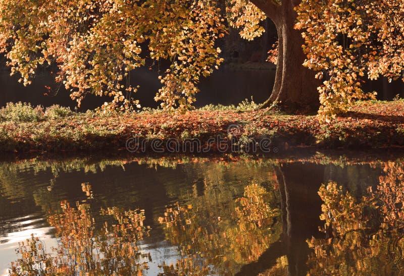 Réflexion d'un arbre d'automne photographie stock libre de droits