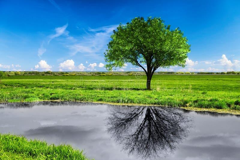 Réflexion d'un arbre dans l'eau images stock