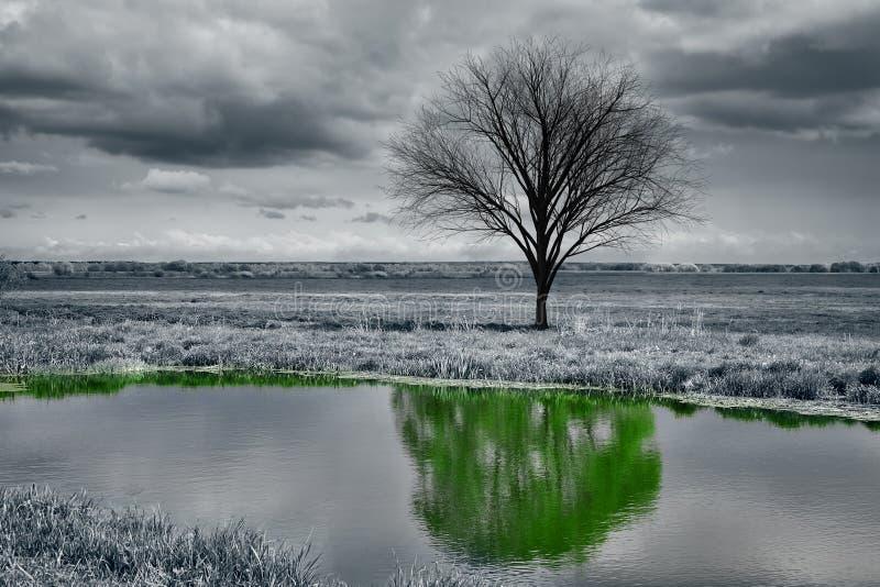 Réflexion d'un arbre dans l'eau images libres de droits