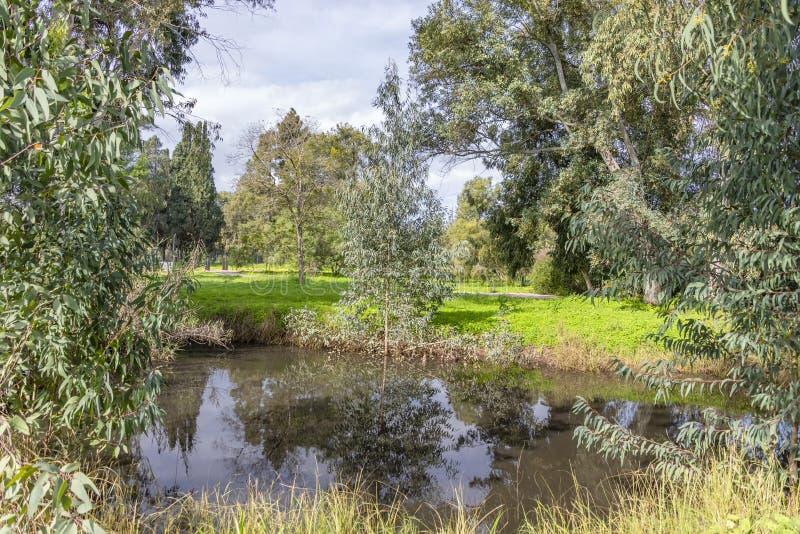 Réflexion dans l'eau des arbres et le ciel avec des nuages entourés par la clairière ensoleillée verte image libre de droits