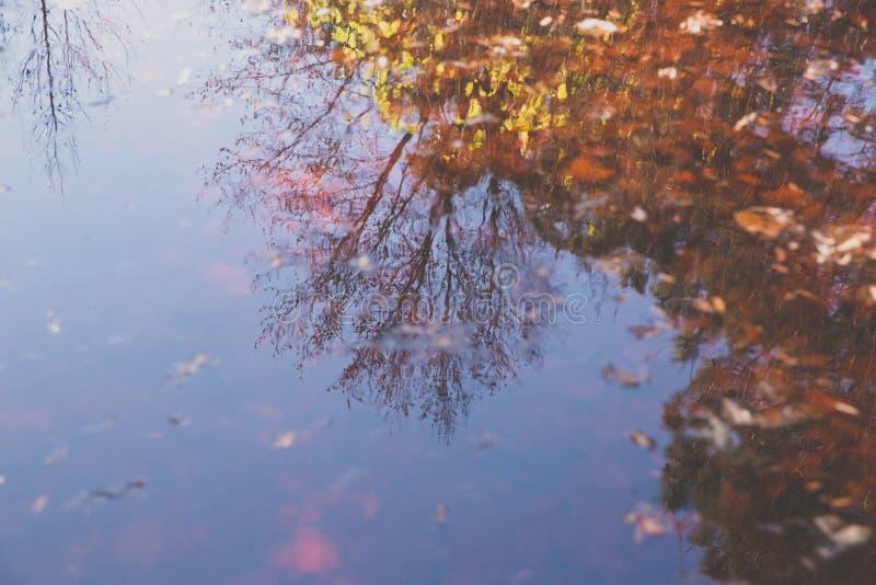 Réflexion dans le lac photos libres de droits