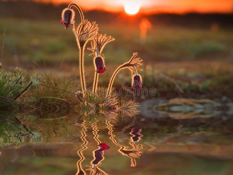 Réflexion de belles fleurs de ressort photos stock