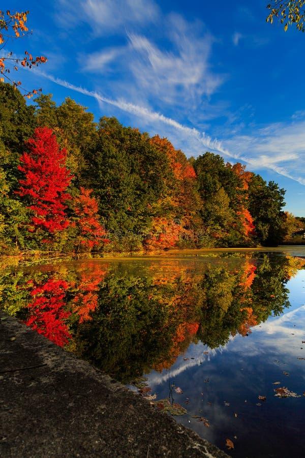 Réflexion de feuille d'automne dans l'étang un jour ensoleillé en automne image libre de droits