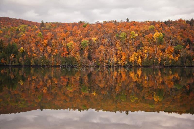 Réflexion de forêt d'automne photo stock