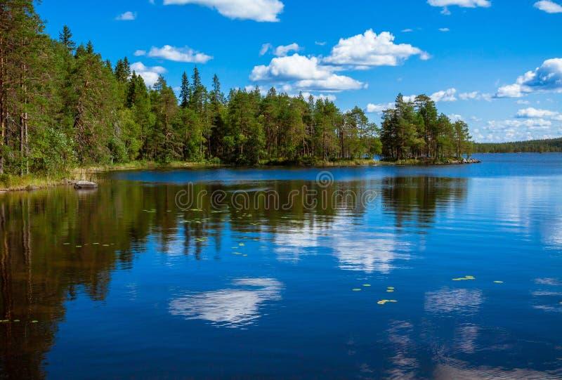Réflexion de forêt de pin dans le lac images libres de droits
