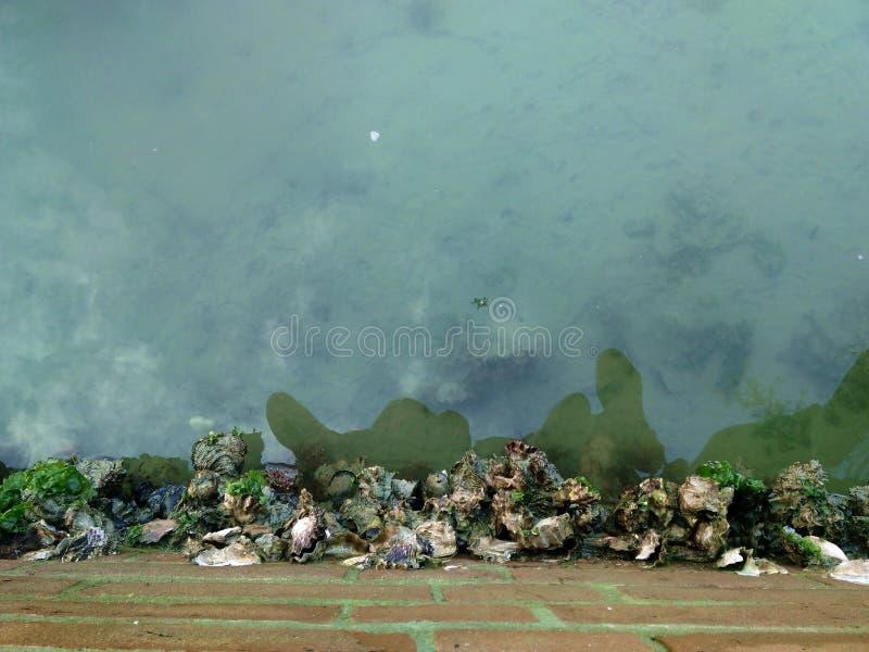 Réflexion de l'eau image libre de droits