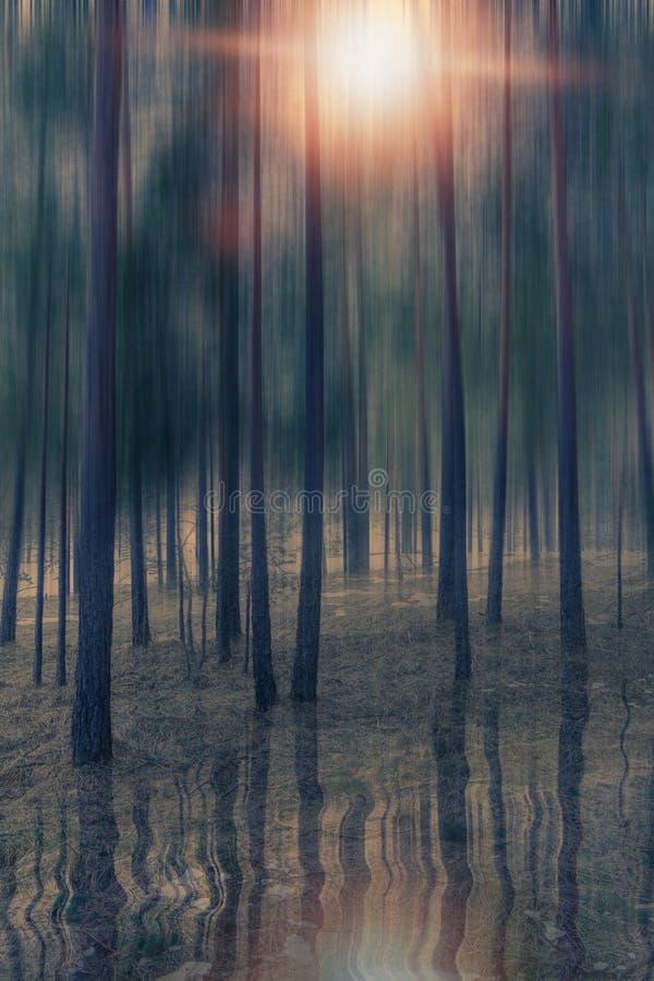 Réflexion de l'eau de forêt blury photos libres de droits