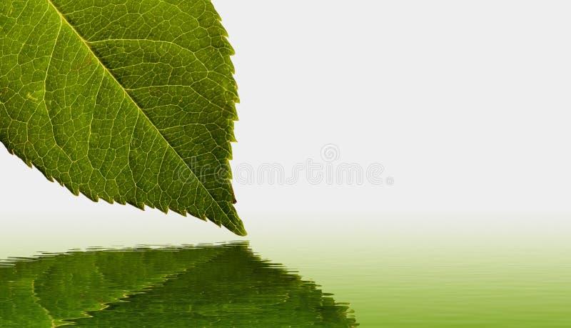 Réflexion de lame et d'eau images stock