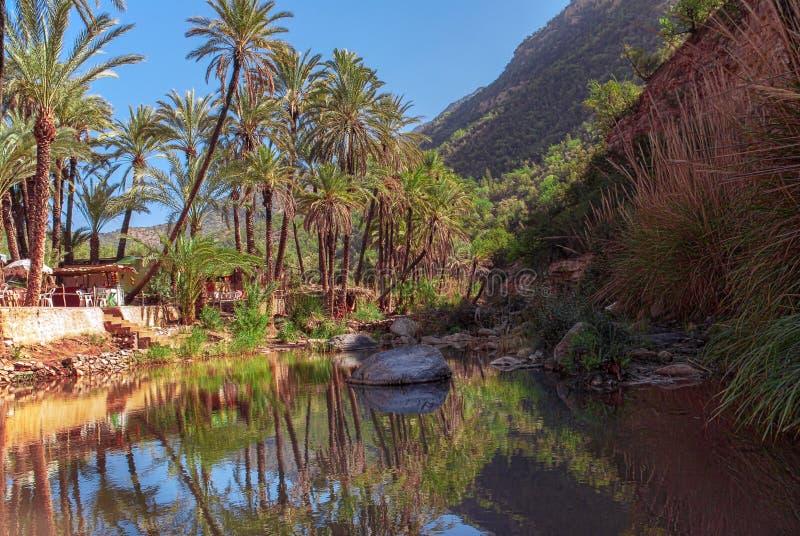 Réflexion de palmier dans l'oasis Agadir Maroc de vallée de Paradise photographie stock